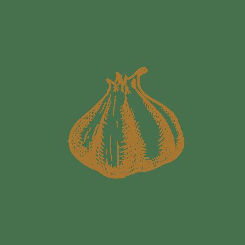 Illustratie knoflook